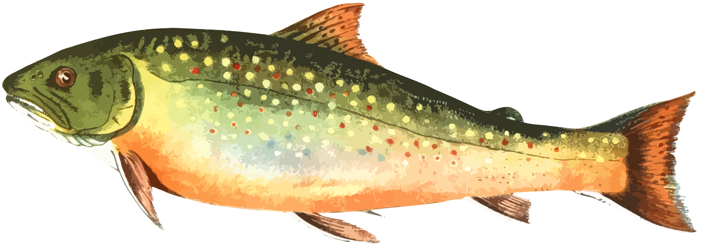 American brook icons png. Trout clipart speckled trout