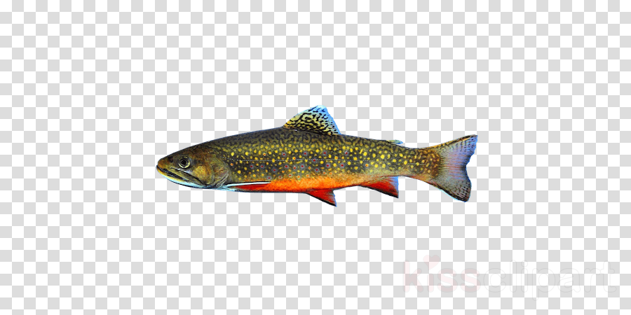 Rainbow cartoon fish transparent. Salmon clipart cutthroat trout