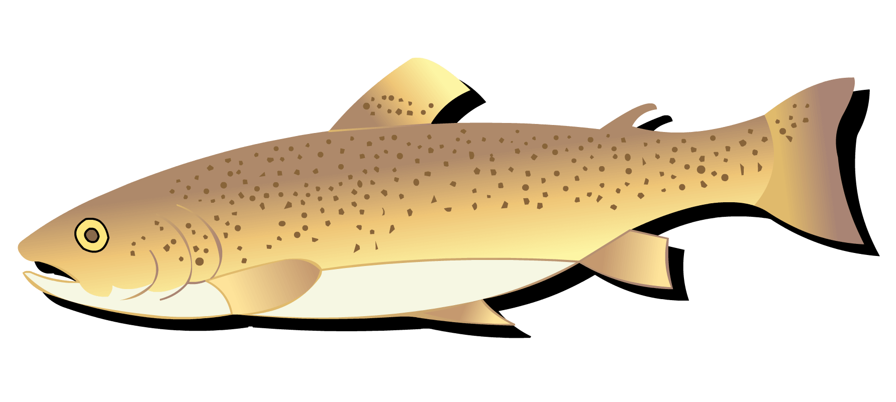 Salmon clipart cutthroat trout. Responsible fishing in western