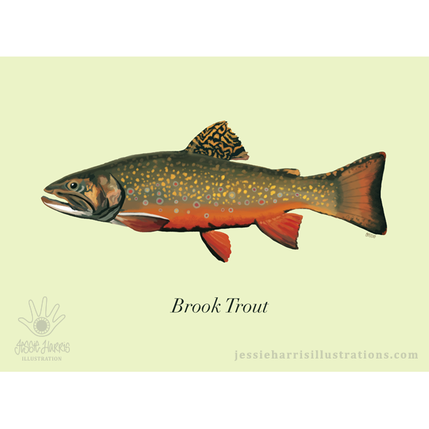 Salmon clipart cutthroat trout. Jessie harris illustration denver