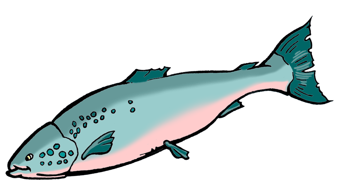 Bio benefits ology science. Salmon clipart pile