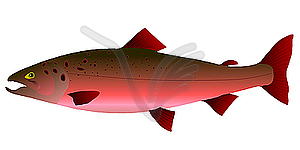 Salmon clipart pink salmon.  clip art clipartlook