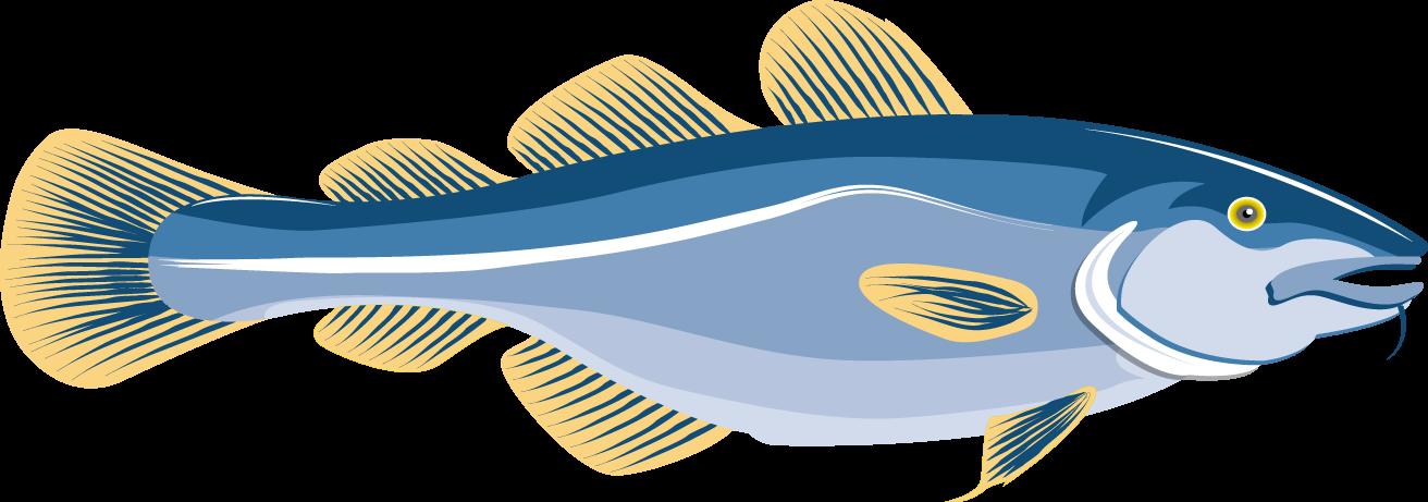 Cod fish at getdrawings. Tuna clipart sea foods