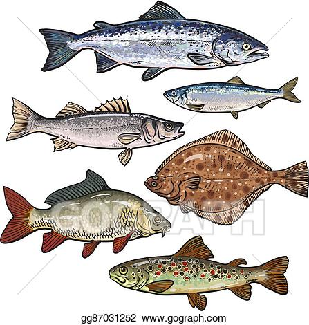 Vector stock colorful sea. Tuna clipart edible fish