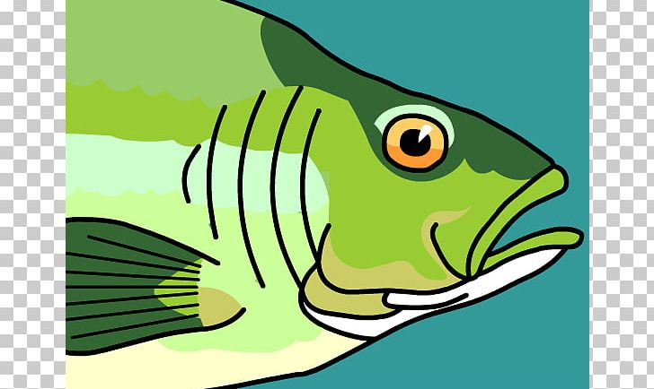 Png art artwork beak. Trout clipart fish gill