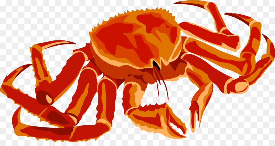 Seafood clipart king crab. Background orange cartoon