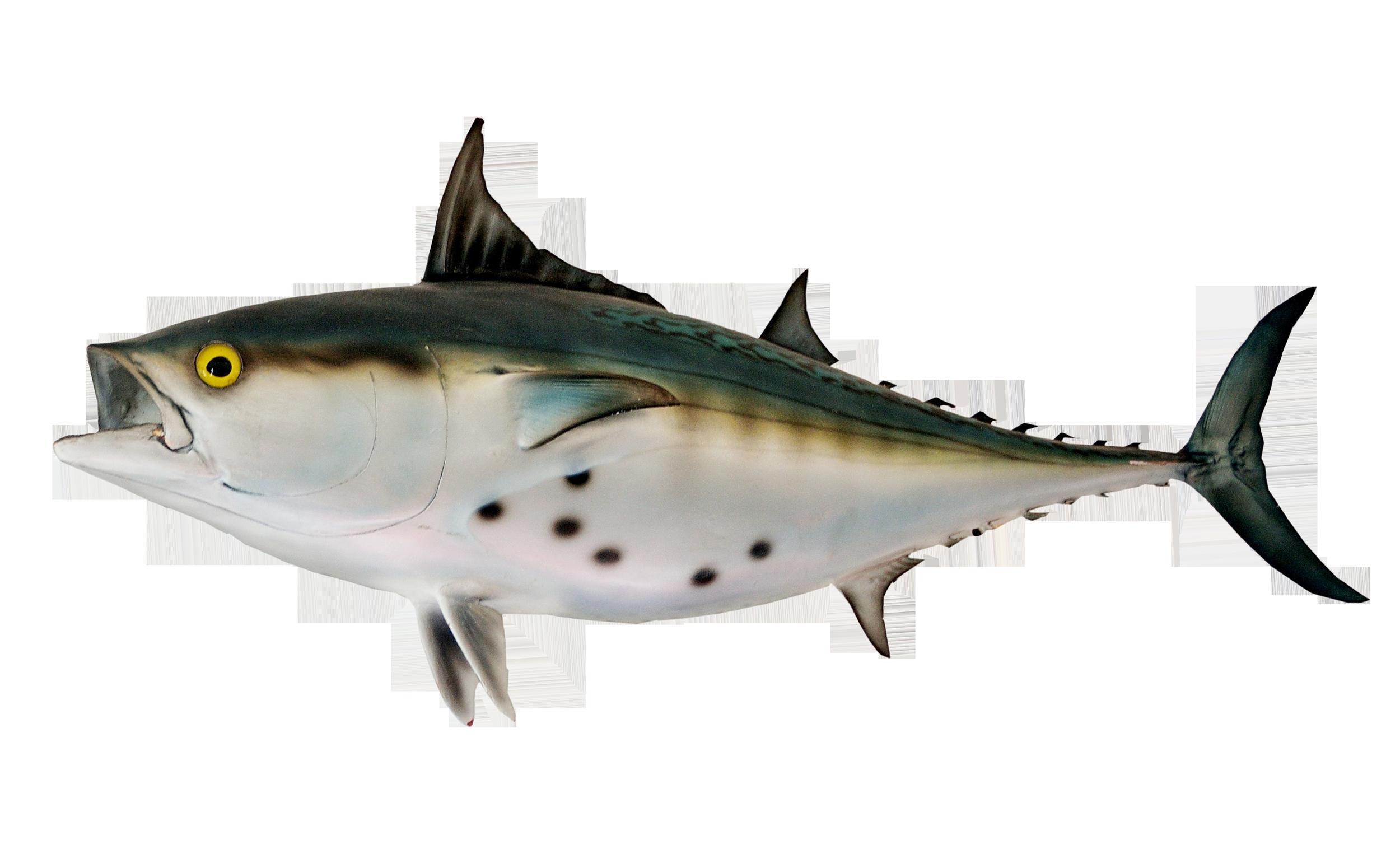Fish png image purepng. Tuna clipart bonito