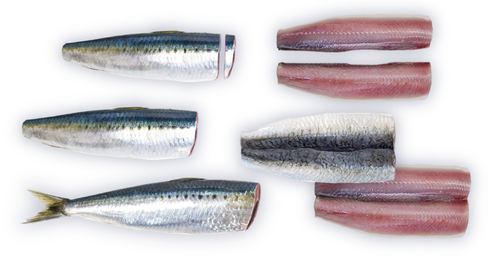 Seac ab promo intro. Seafood clipart sardine fish