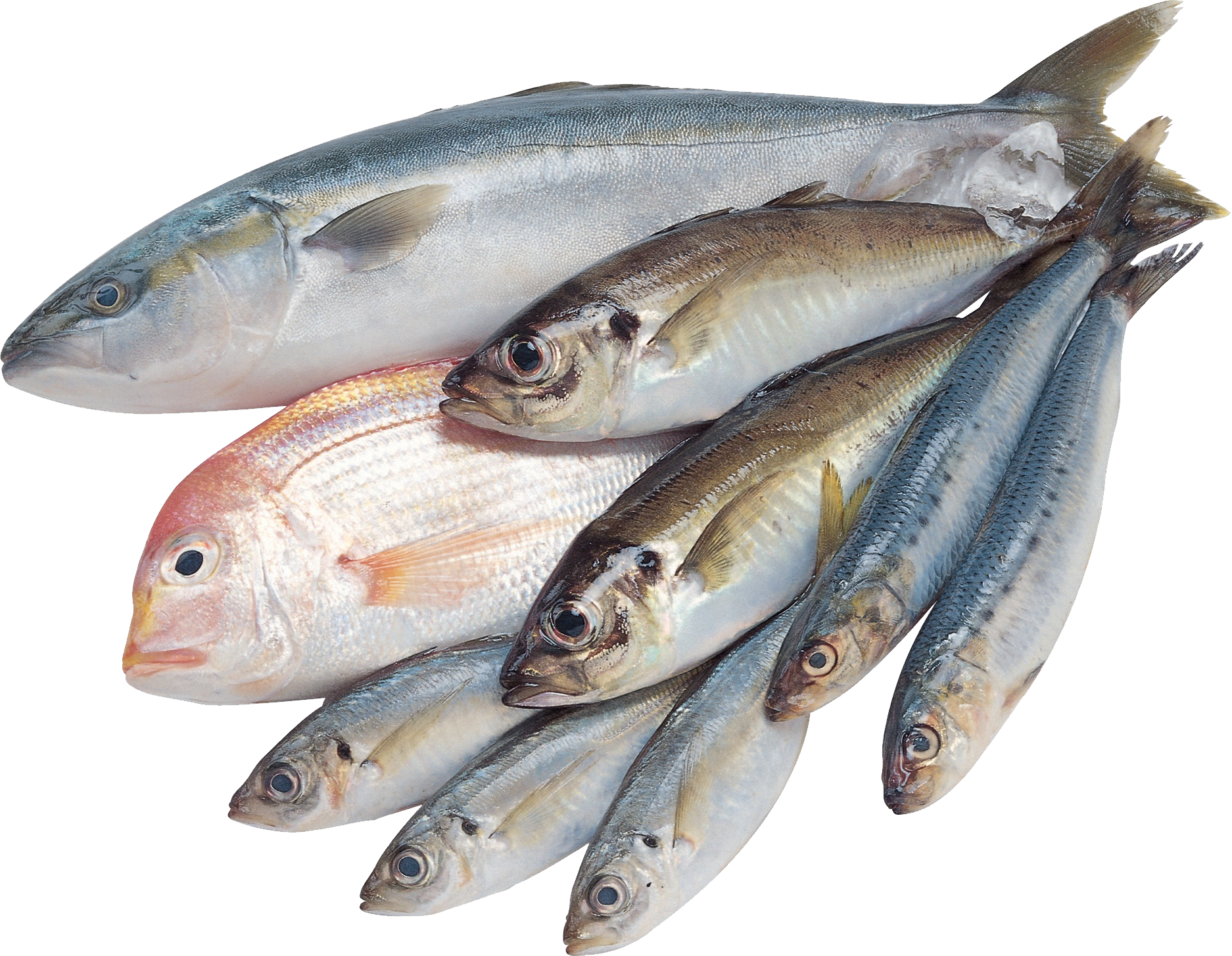 Seafood clipart sardine fish. Png web icons download