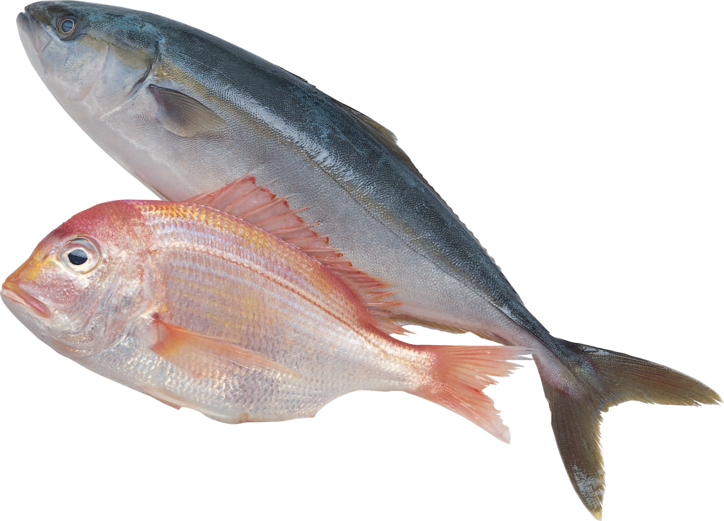 Seafood clipart sardine fish. Products forage clip art