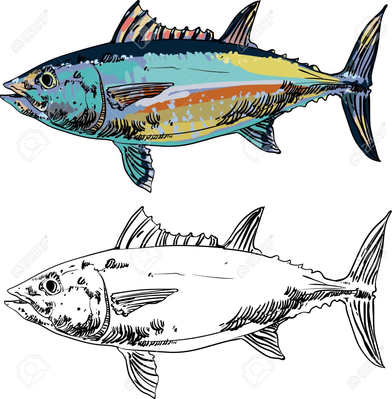 Seafood clipart tuna fish. Free download clip art