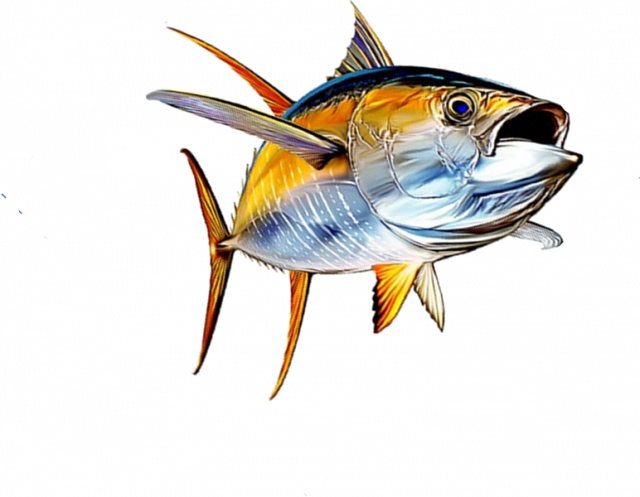 Pin by johan stenborg. Tuna clipart fresh fish