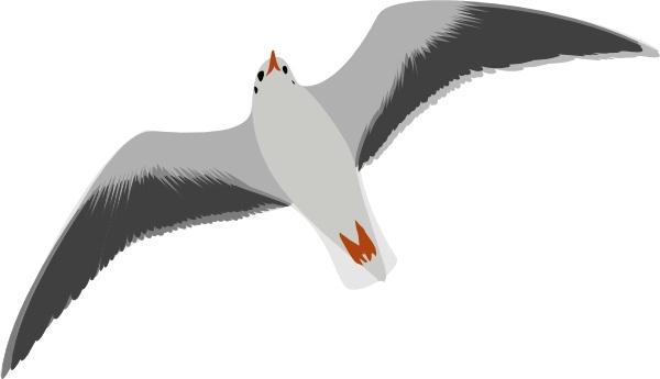 Seagull clipart. Sea gull clip art