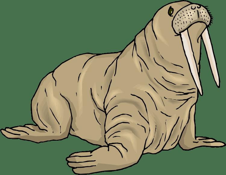 Seal clipart arctic fish.  walrus huge freebie