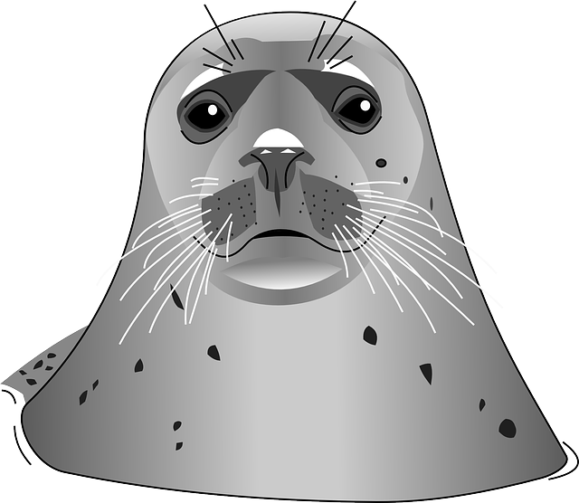 Seal clipart harbor seal.  stickers png transparent