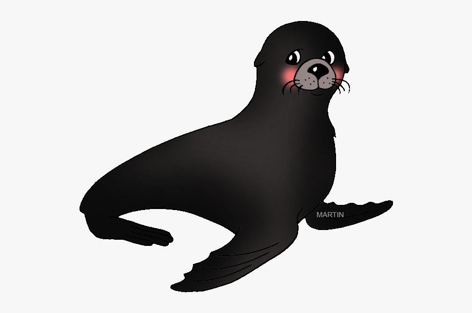 Seal clipart real animal. Picture walrus clip art