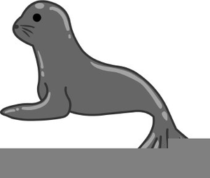 Free images at clker. Seal clipart real animal