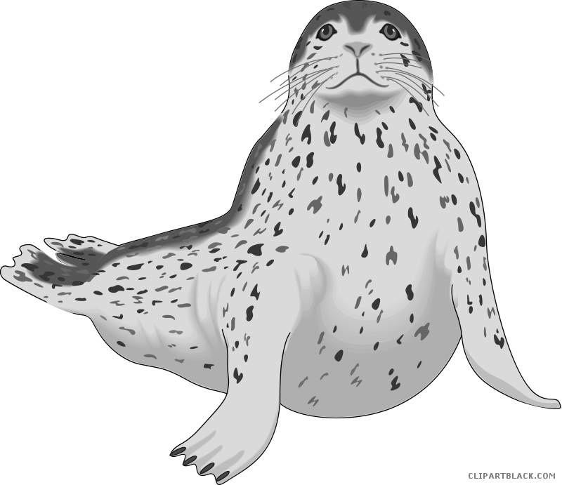 Seal clipart real animal. Page of clipartblack com