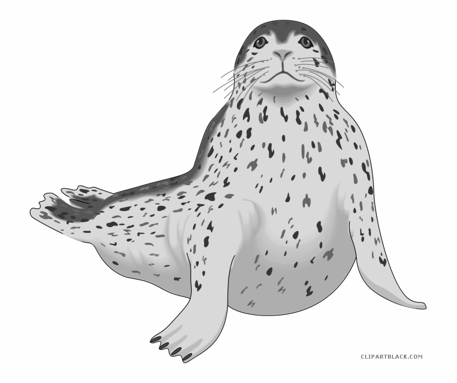 Leopard clip art . Seal clipart real animal