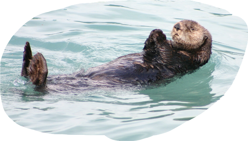 Seal clipart sea otter. Popular and trending stickers