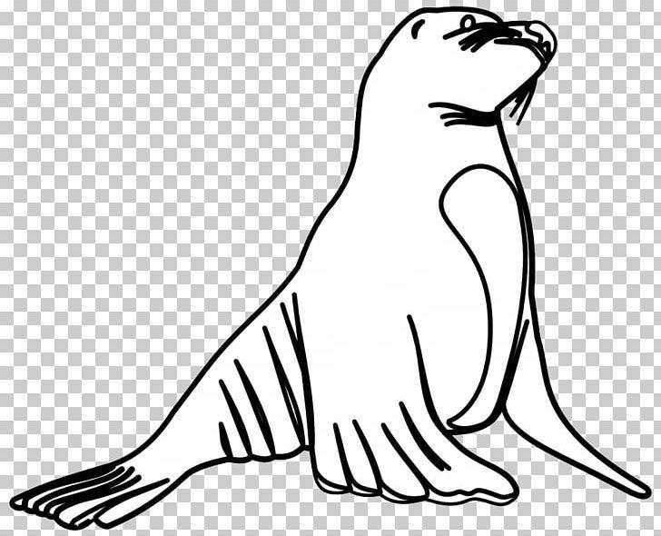 Lion earless png beak. Seal clipart sea otter