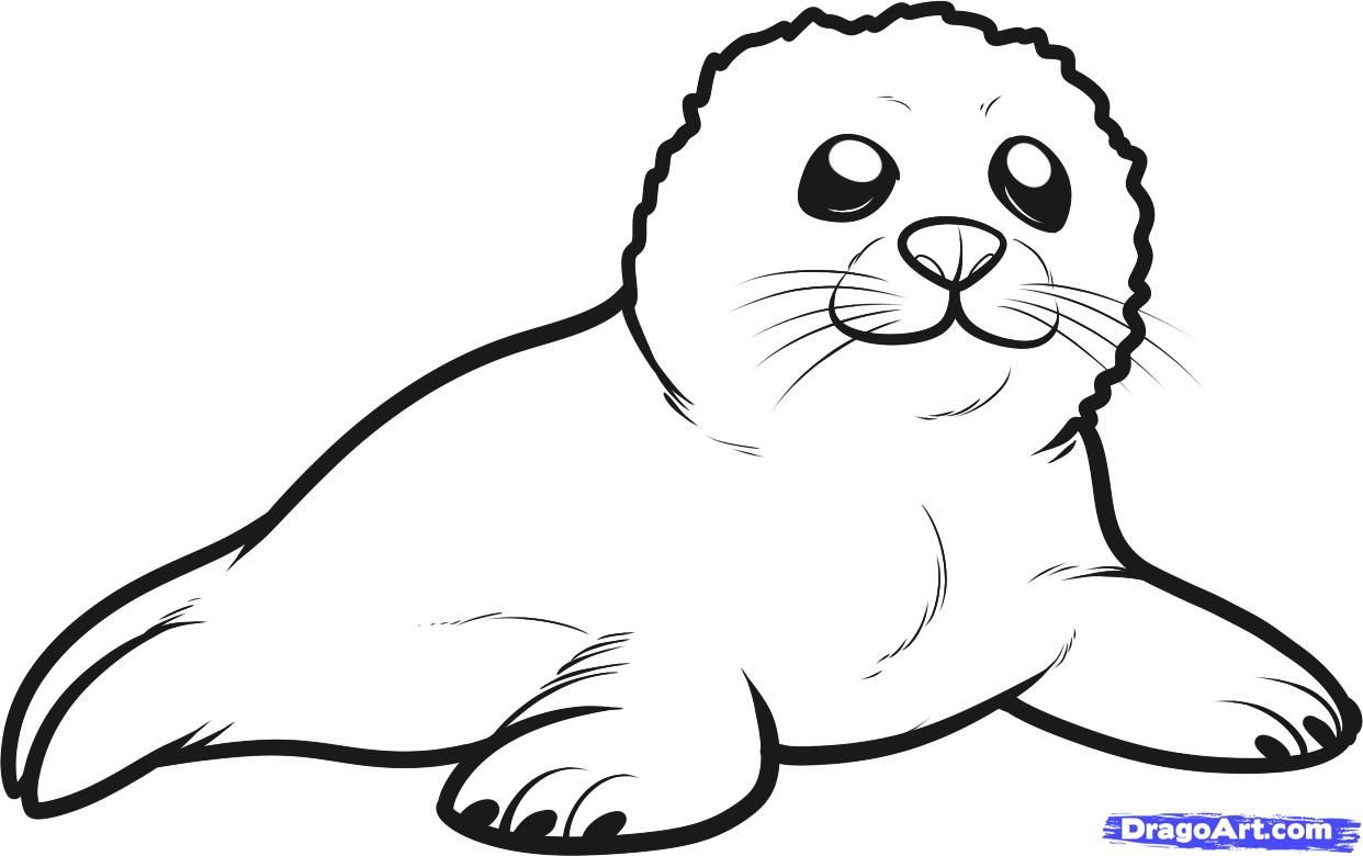 Seal clipart seal pup. How to draw a