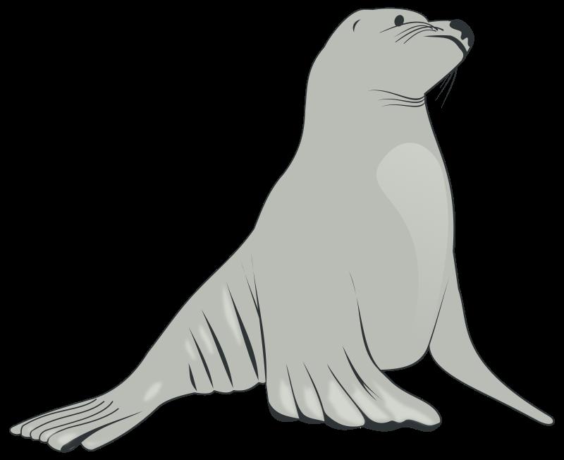 Sea lion medium image. Walrus clipart animal arctic