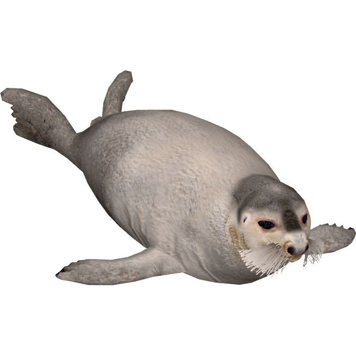 Animal png transparent images. Seal clipart weddell seal