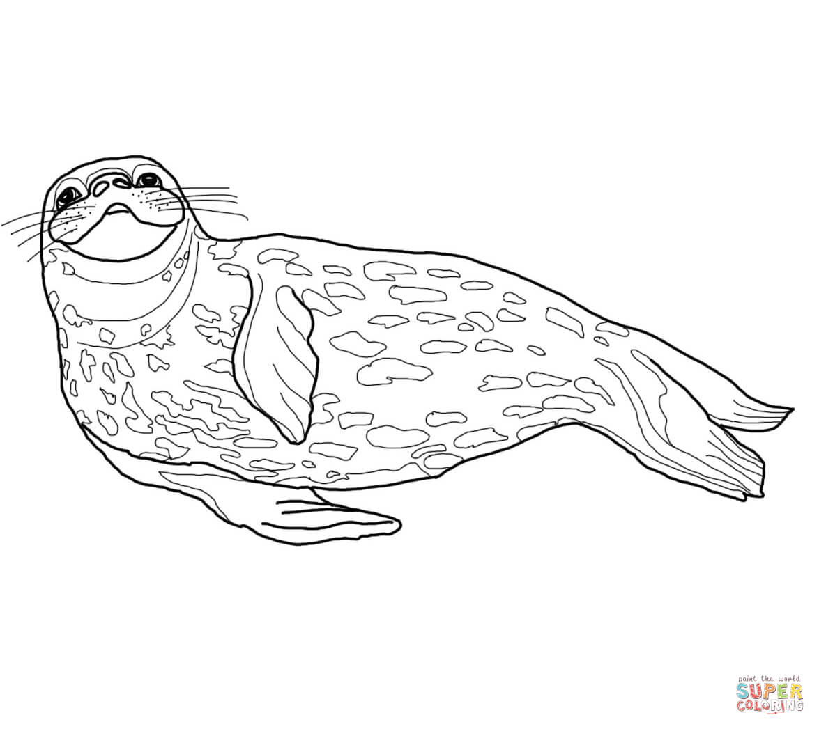Seal clipart weddell seal. Coloring page free printable