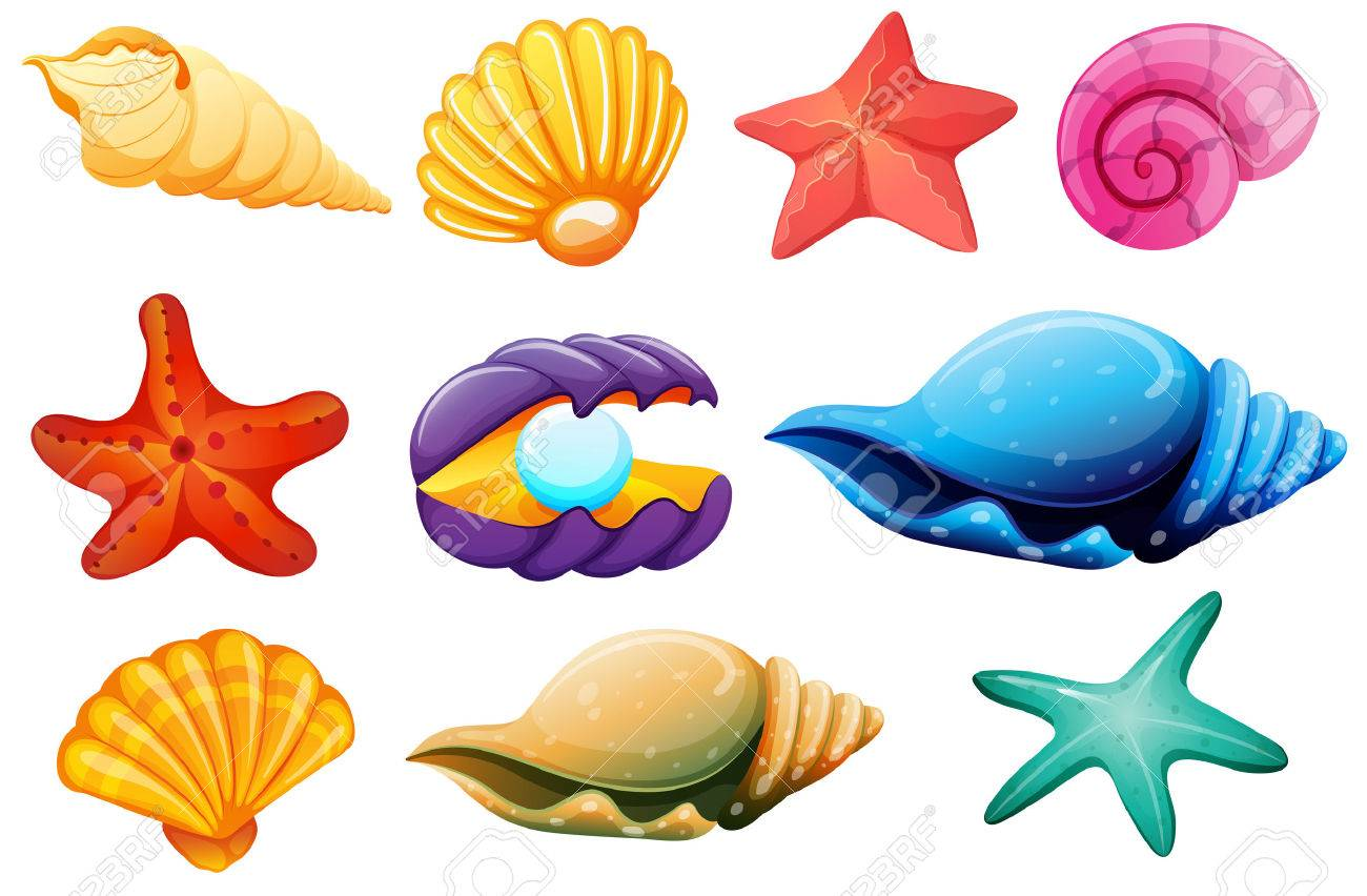 Shells drawing at getdrawings. Seashells clipart