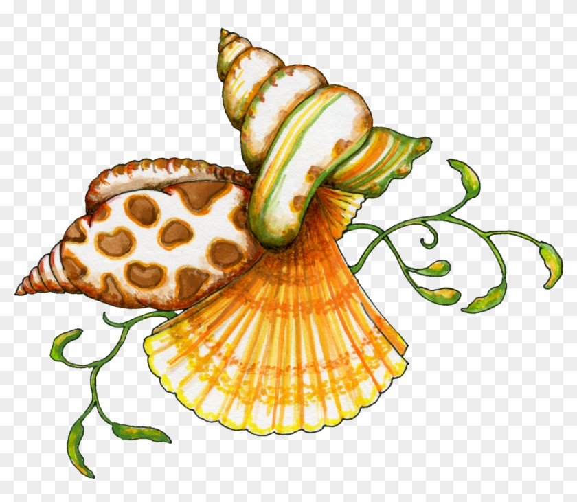 Seashells clipart. Flamingo sea shell seashell