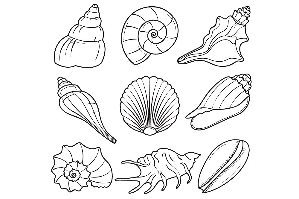 Illustrations creative market . Seashells clipart
