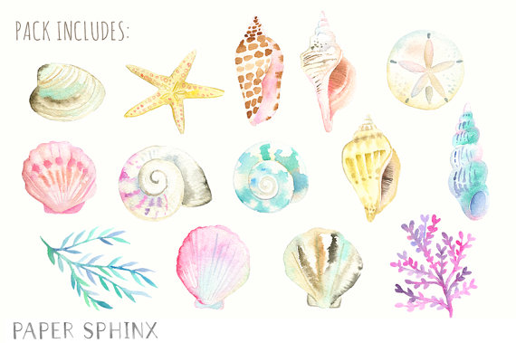 Watercolor nautical clip art. Seashells clipart