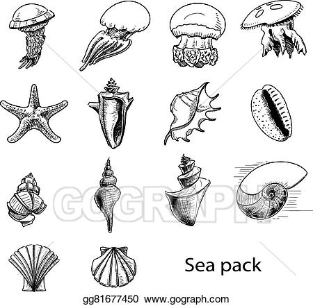Shell clipart sea animal. Eps vector collection of