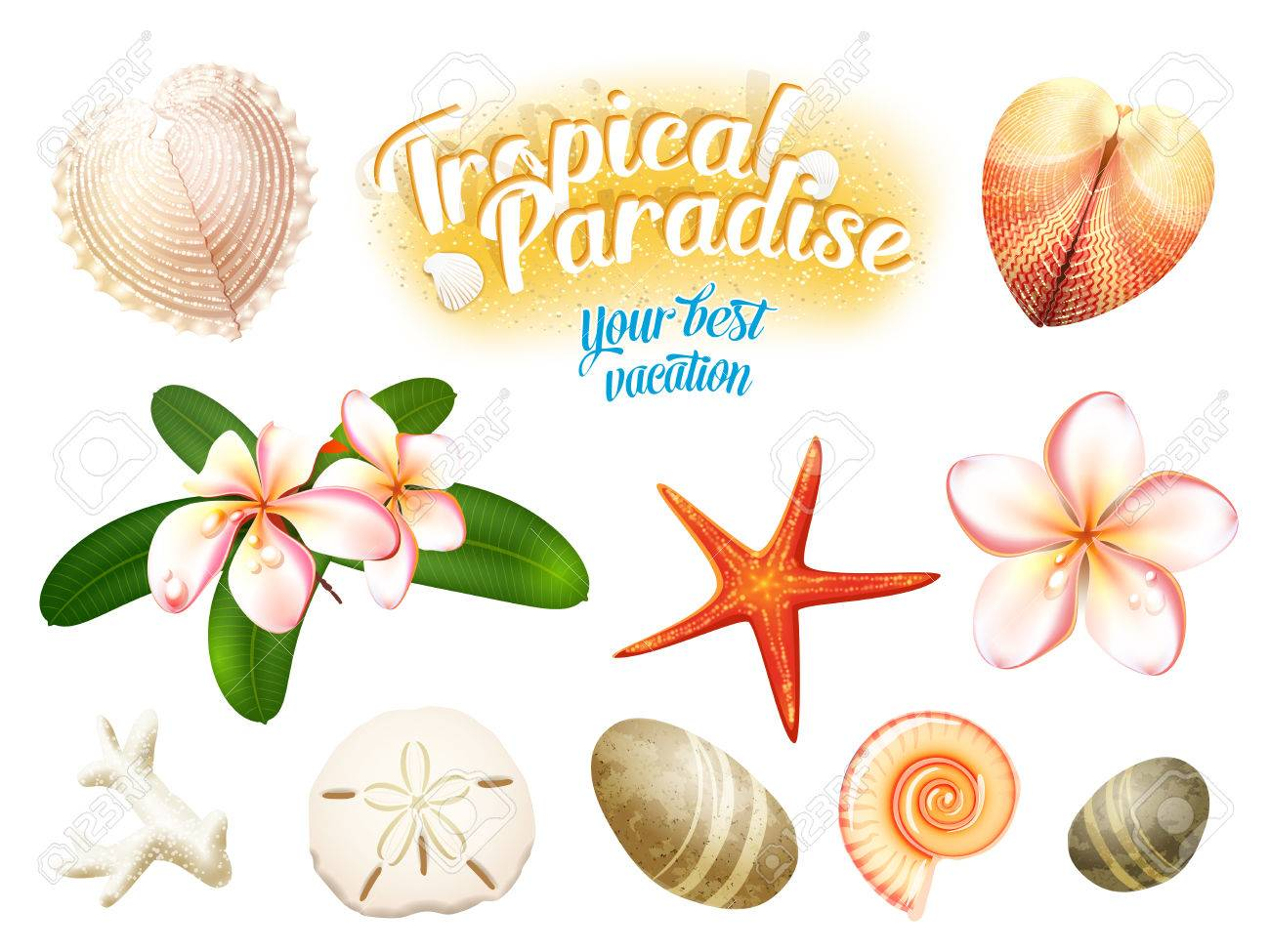 Seashells clipart 8 object. Cliparts free download best