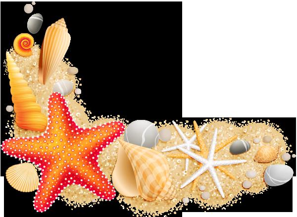 Seashell clip art png. Seashells clipart 8 object