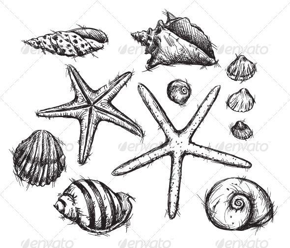Selection of sea shells. Seashells clipart 8 object