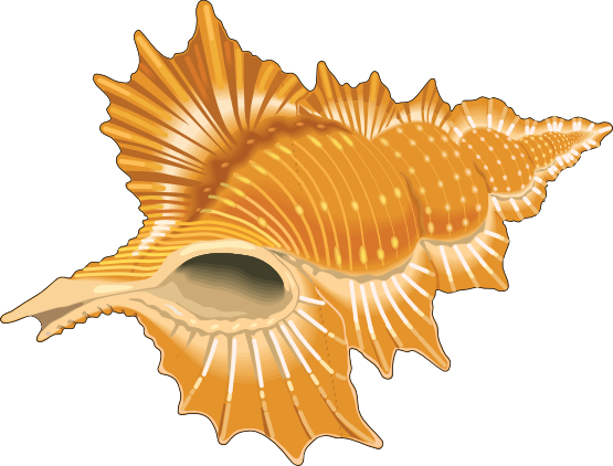 Shell clipart animated. Shells clip art seashell