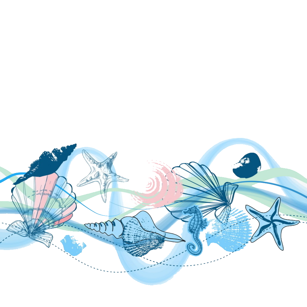 seashells clipart aqua