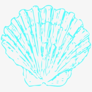 Shell pink seashell blue. Seashells clipart aqua