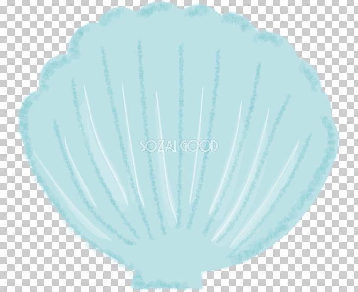 Illustrator seashell png . Seashells clipart aqua