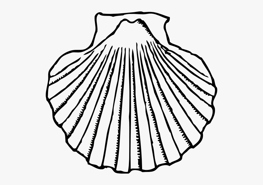 Shell clipart black and white. Sea free