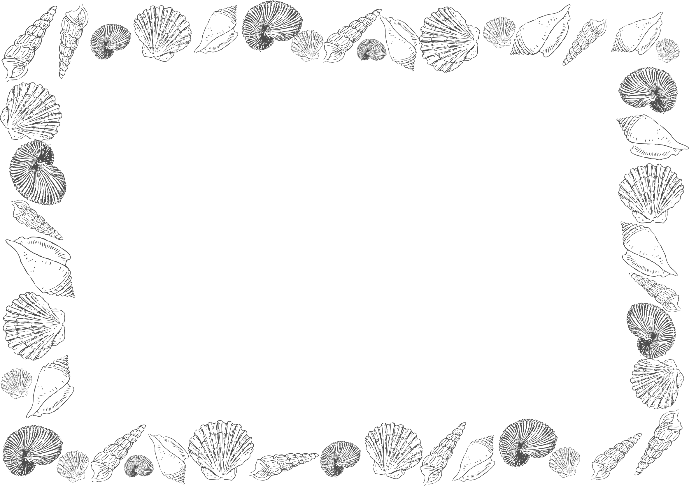 Shell clipart frame. A big image png