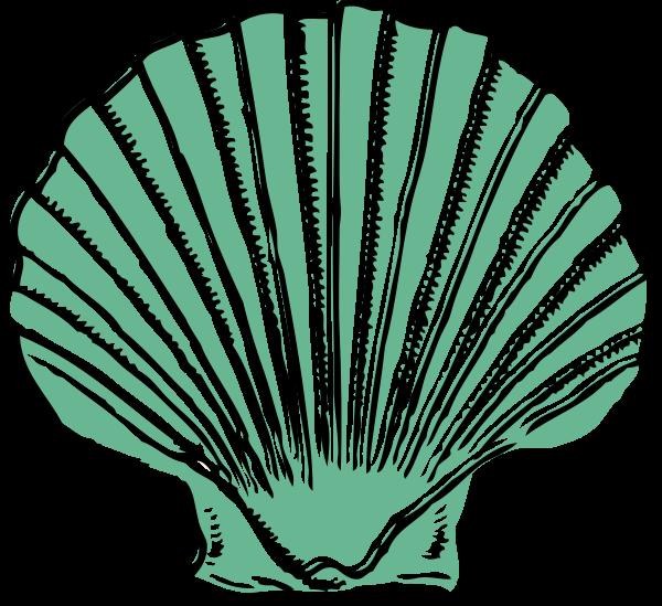 Seashells clipart green. Sage seashell clip art