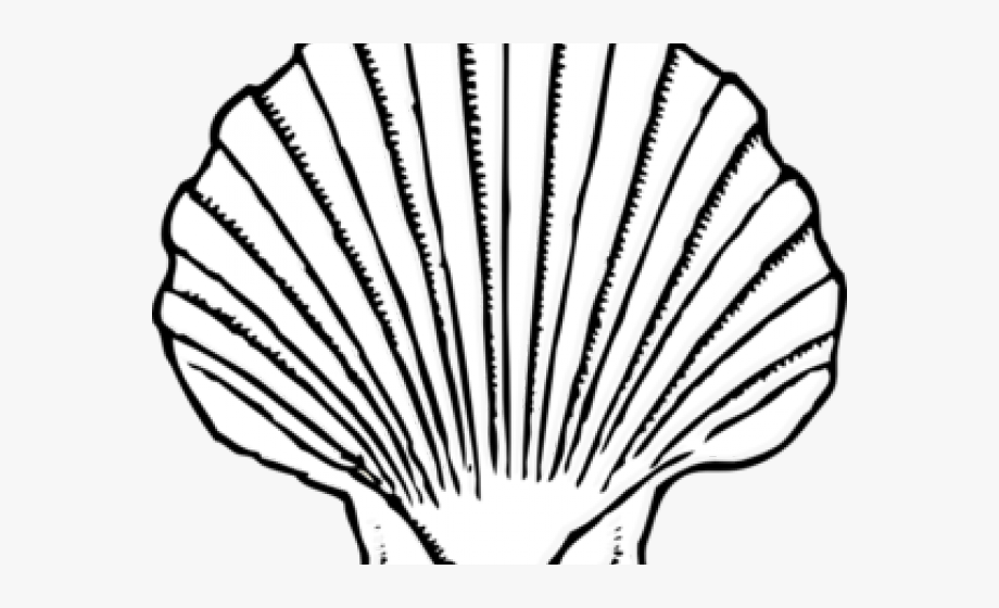 Shell clipart clear. White seashell png free