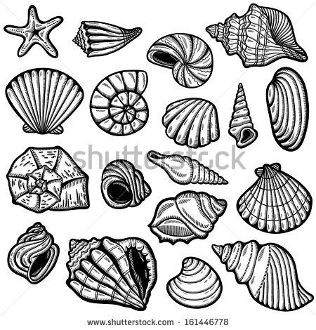 Shell clipart different object. Black and white patterns