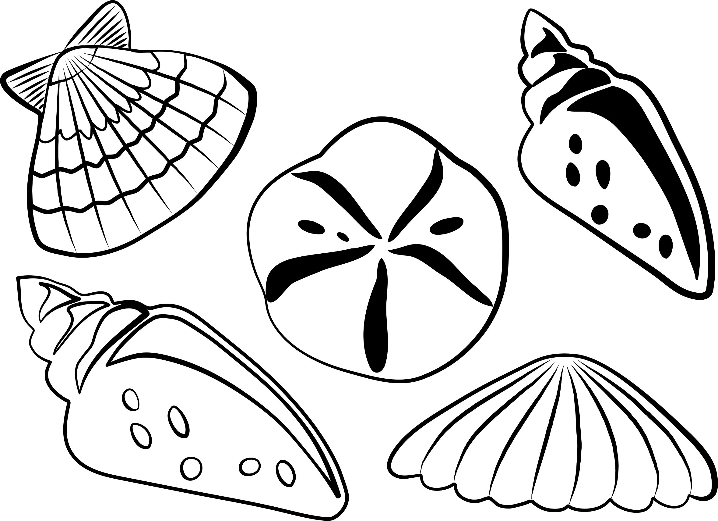 Shell clipart lineart. Sea shells icons png