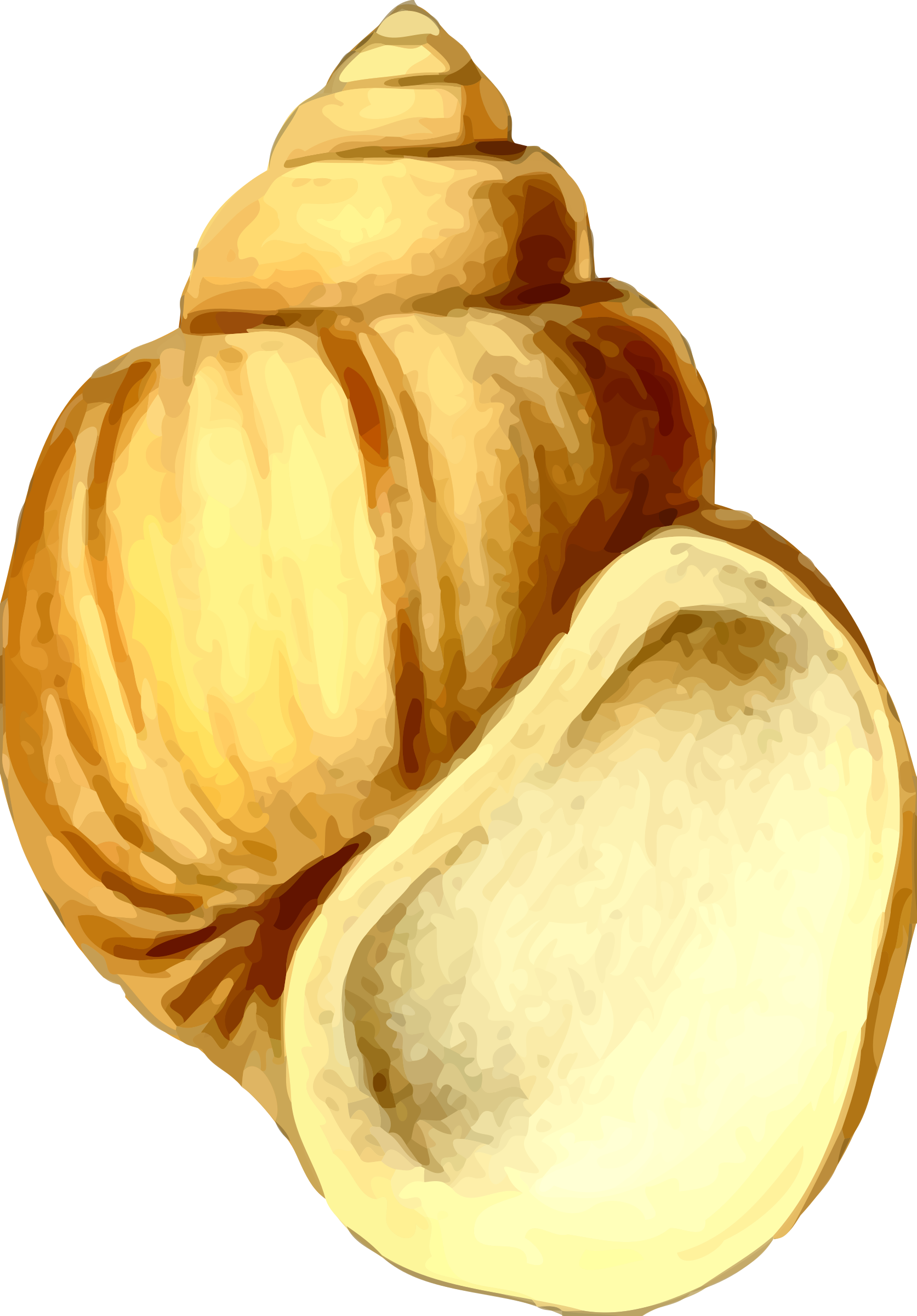 Shell clipart sea foods. Big image png