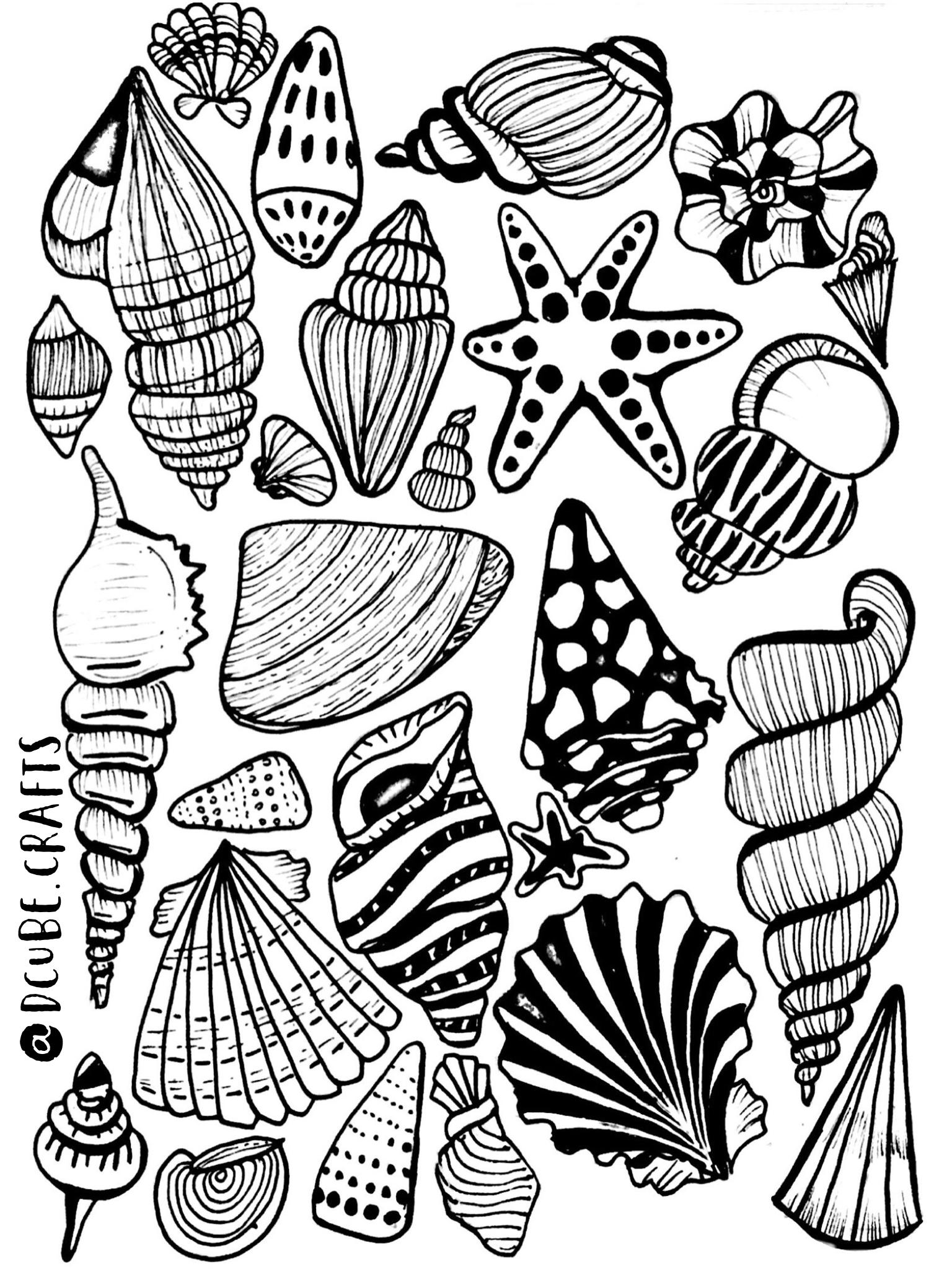 Shell clipart sea rock. Shells border name plates