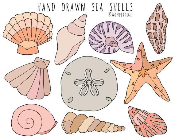 Shells hand drawn clip. Shell clipart shell sea